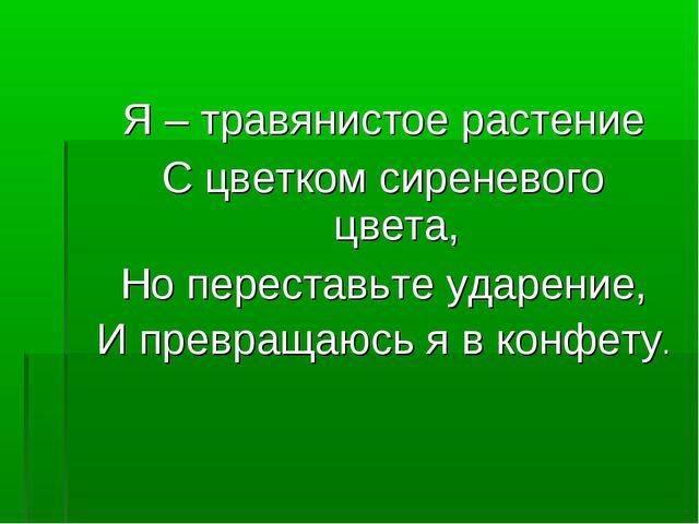 Я – травянистое растение С цветком сиреневого цвета, Но переставьте ударение,...