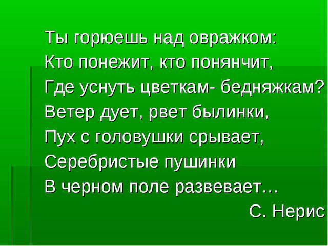 Ты горюешь над овражком: Кто понежит, кто понянчит, Где уснуть цветкам- бедня...