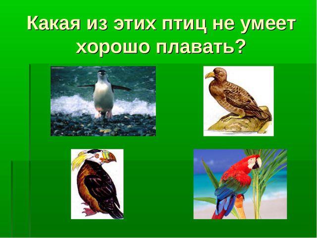 Какая из этих птиц не умеет хорошо плавать?