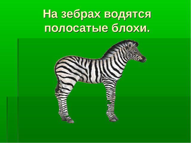 На зебрах водятся полосатые блохи.
