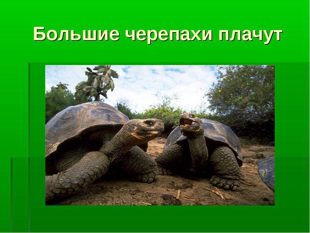 Большие черепахи плачут