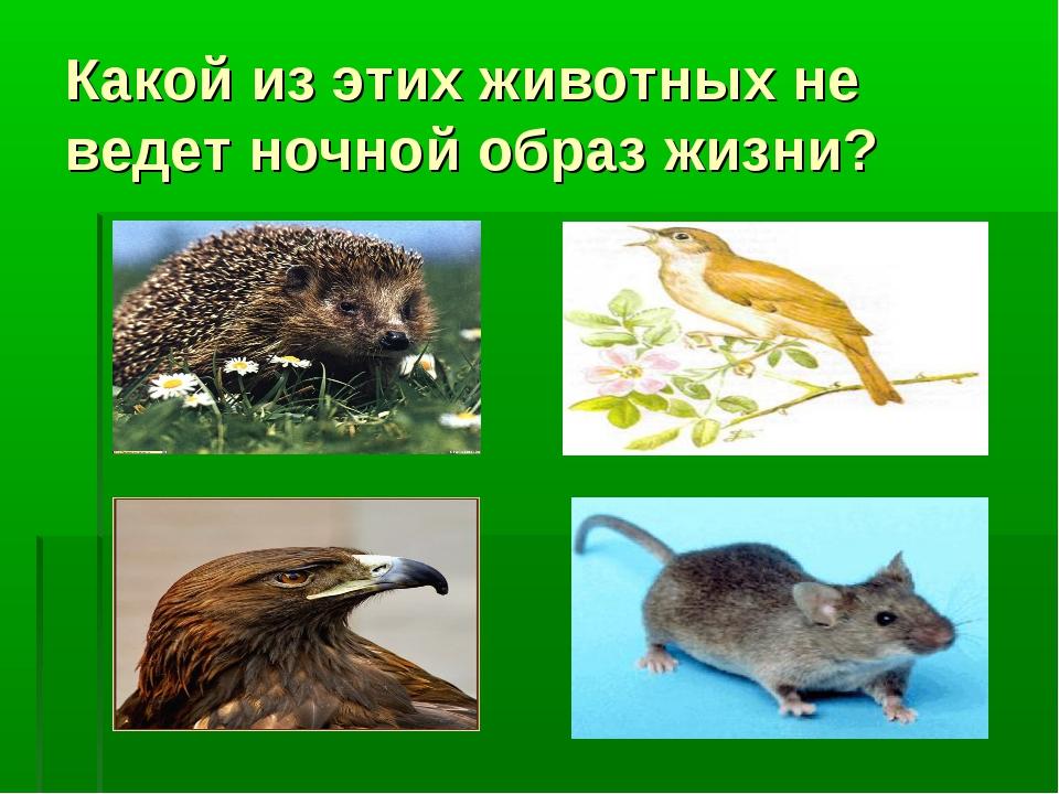 Какой из этих животных не ведет ночной образ жизни?