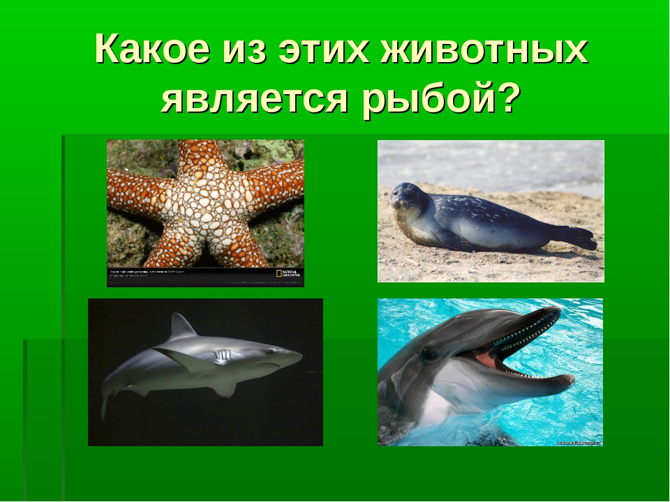Какое из этих животных является рыбой?