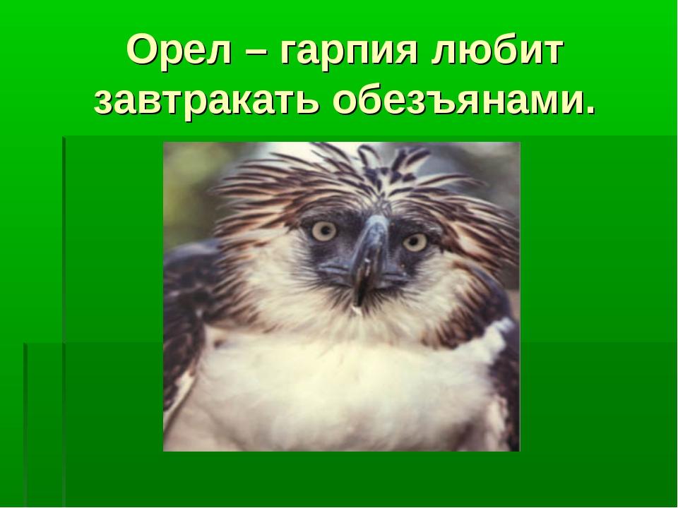 Орел – гарпия любит завтракать обезъянами.