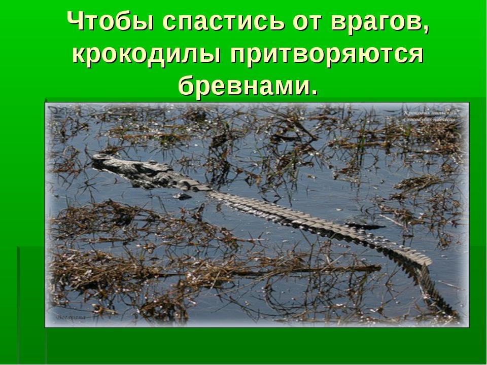 Чтобы спастись от врагов, крокодилы притворяются бревнами.