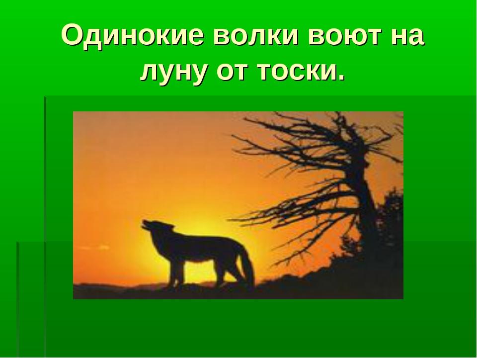 Одинокие волки воют на луну от тоски.