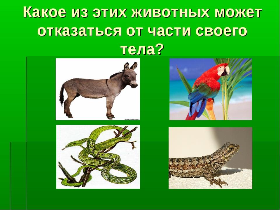 Какое из этих животных может отказаться от части своего тела?