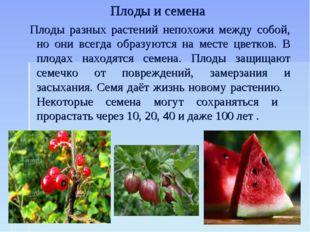 Плоды и семена Плоды разных растений непохожи между собой, но они всегда обра