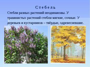 С т е б е л ь Стебли разных растений неодинаковы. У травянистых растений стеб