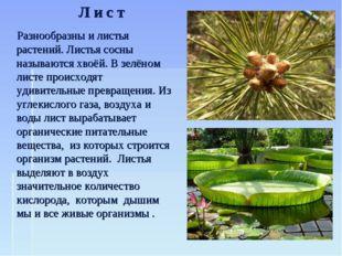 Разнообразны и листья растений. Листья сосны называются хвоёй. В зелёном лис