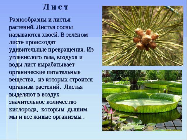 Разнообразны и листья растений. Листья сосны называются хвоёй. В зелёном лис...