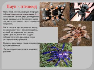 Тарантул Тарантул– общее название нескольких видов крупных пауков, принадле