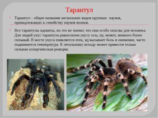 Отряд Скорпионы Задний отдел брюшка членистый Педипальпы в виде клешней На ко