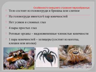Особенности внешнего строения паукообразных: Тело состоит из головогруди и бр