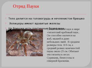 Роль паутины