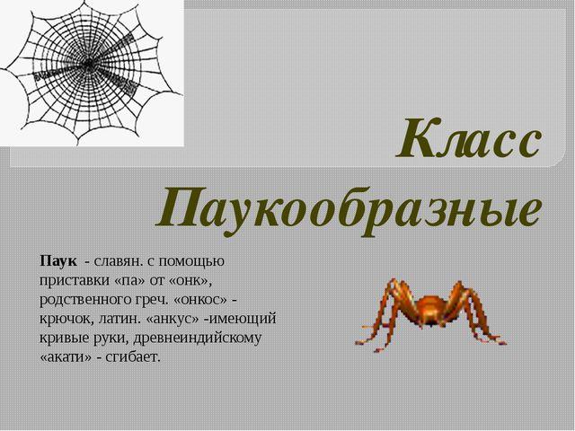 Класс Паукообразные Паук - славян. с помощью приставки «па» от «онк», родстве...