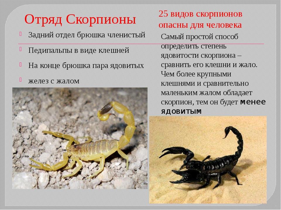 Виды клещей: Растительноядные (паутинный, мучной) Мучные клещи— очень мелки...