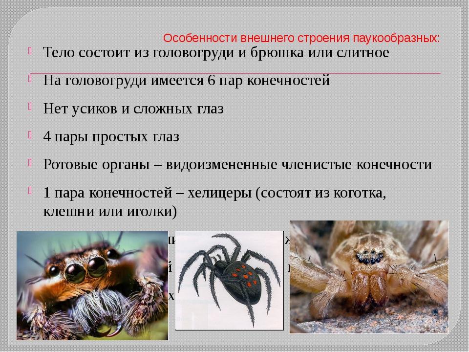 Особенности внешнего строения паукообразных: Тело состоит из головогруди и бр...
