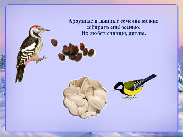Арбузные и дынные семечки можно собирать ещё осенью. Их любят синицы, дятлы.