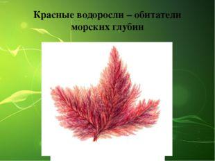 Красные водоросли – обитатели морских глубин