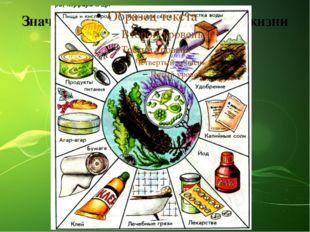Значение водорослей в природе и жизни человека