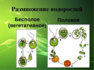 Размножение водорослей Половое Бесполое (вегетативное)
