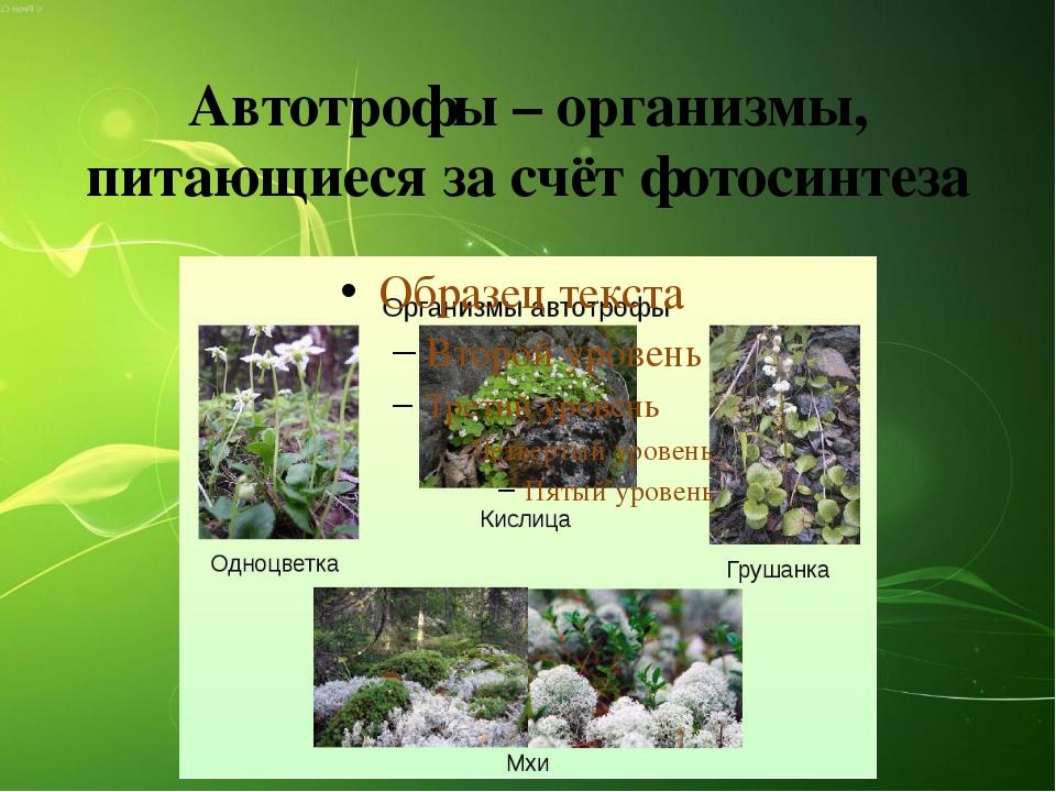 Автотрофы – организмы, питающиеся за счёт фотосинтеза
