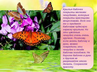 Крылья бабочек покрыты мелкими чешуйками, которые покрыты красящими веществам