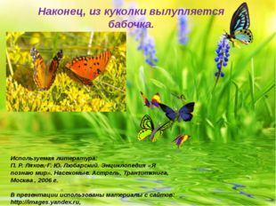 Наконец, из куколки вылупляется бабочка. Используемая литература: П. Р. Ляхов