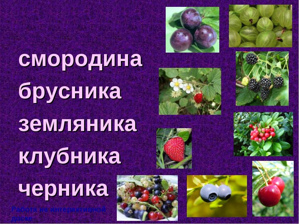 смородина брусника земляника клубника черника Работа на интерактивной доске