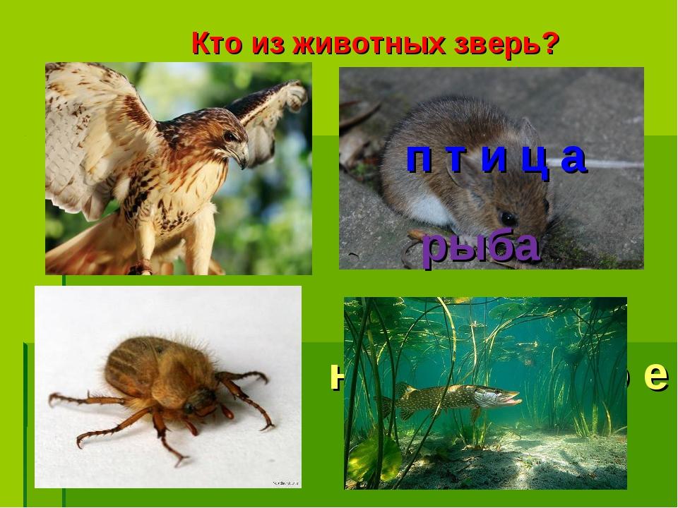 Кто из животных зверь? п т и ц а н а с е к о м о е рыба
