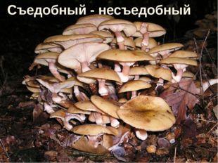 * http://aida.ucoz.ru * Съедобный - несъедобный http://aida.ucoz.ru