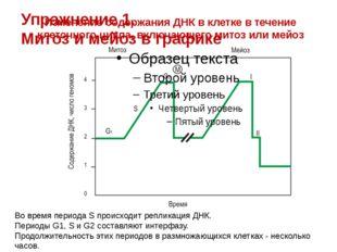 Изменение содержания ДНК в клетке в течение клеточного цикла, включающего мит