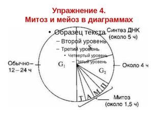 Упражнение 4. Митоз и мейоз в диаграммах