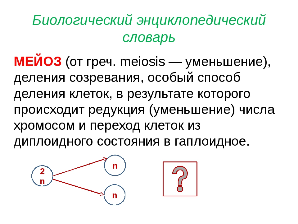 Биологический энциклопедический словарь МЕЙОЗ (от греч. meiosis — уменьшение)...