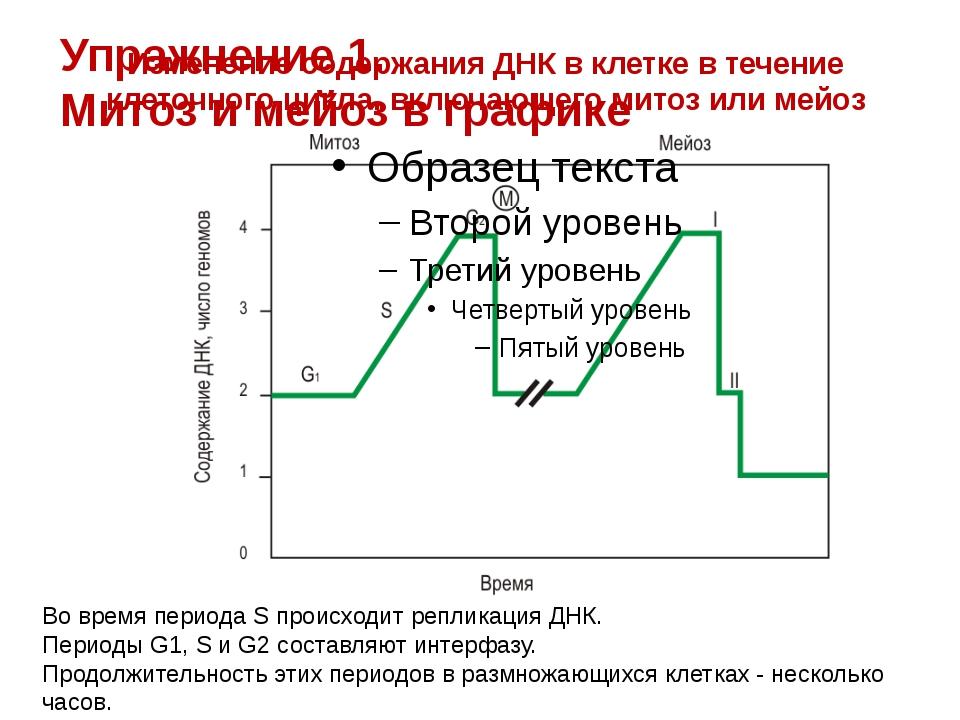 Изменение содержания ДНК в клетке в течение клеточного цикла, включающего мит...