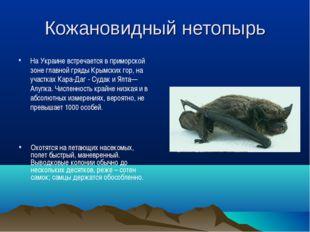 Кожановидный нетопырь На Украине встречается в приморской зоне главной гряды