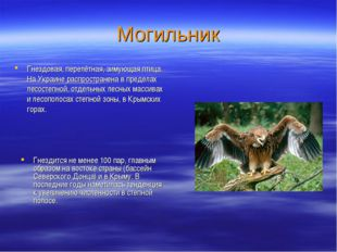 Могильник Гнездовая, перелётная, зимующая птица. На Украине распространена в