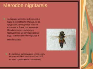 Merodon nigritarsis На Украине известен из Донецкой и Харьковской области и К