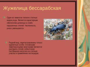 Жужелица бессарабская Один из немногих типично степных видов рода. Является х