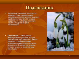Подснежник Ботаническое название этого цветка - галантус. Но мы с давних-дав