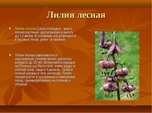 Лилия лесная Лилия лесная (Lilium martagon) - много летняя растение, достигаю