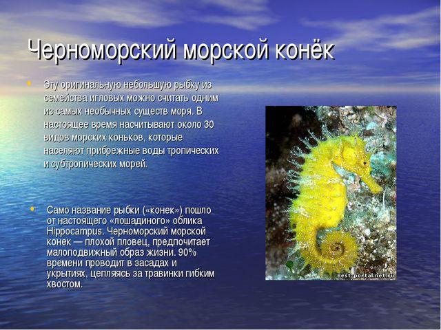 Черноморский морской конёк Эту оригинальную небольшую рыбку из семейства игло...