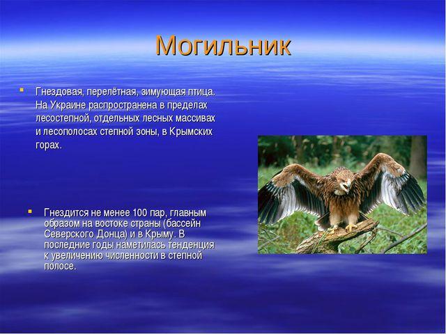 Могильник Гнездовая, перелётная, зимующая птица. На Украине распространена в...