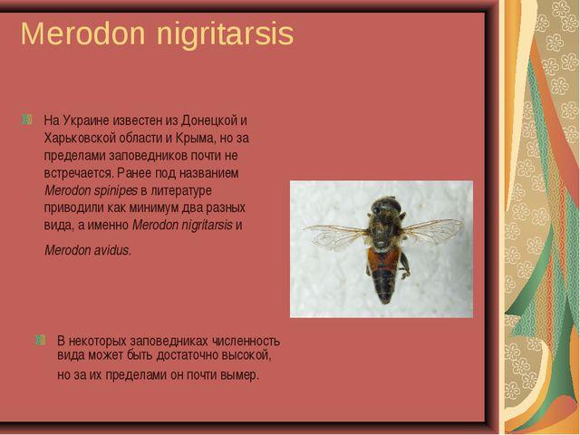 Merodon nigritarsis На Украине известен из Донецкой и Харьковской области и К...