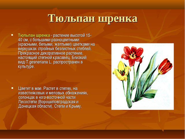 Тюльпан шренка Тюльпан шренка - растение высотой 15-40 см, с большими разноцв...