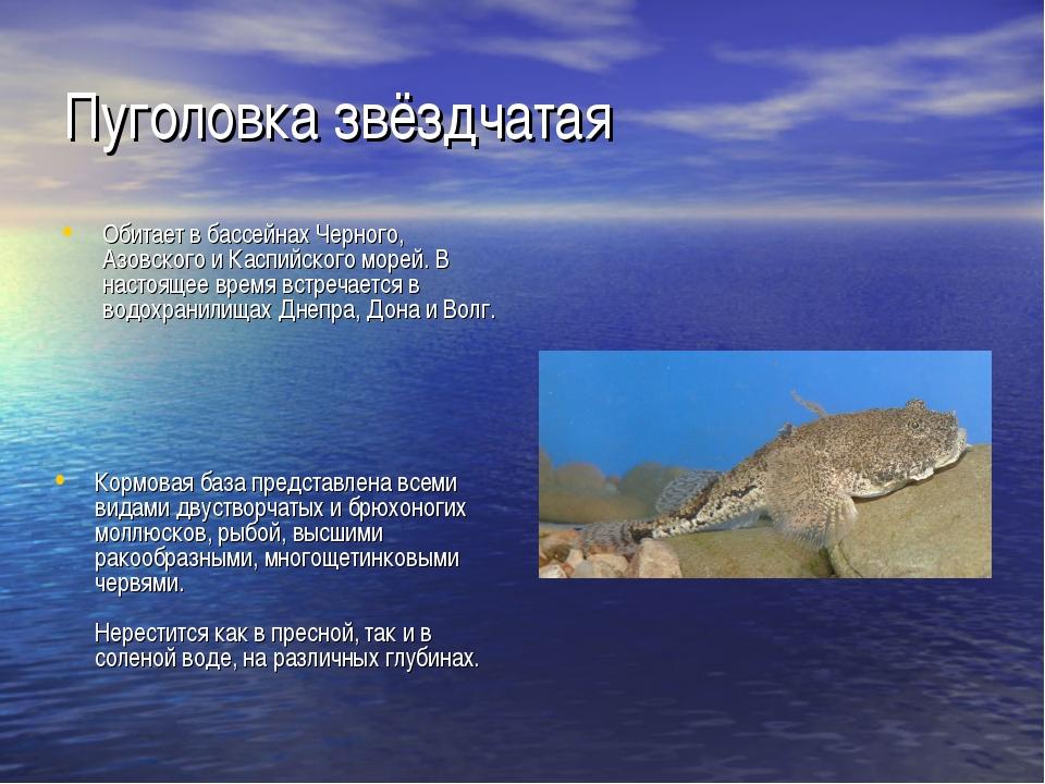 Пуголовка звёздчатая Обитает в бассейнах Черного, Азовского и Каспийского мор...