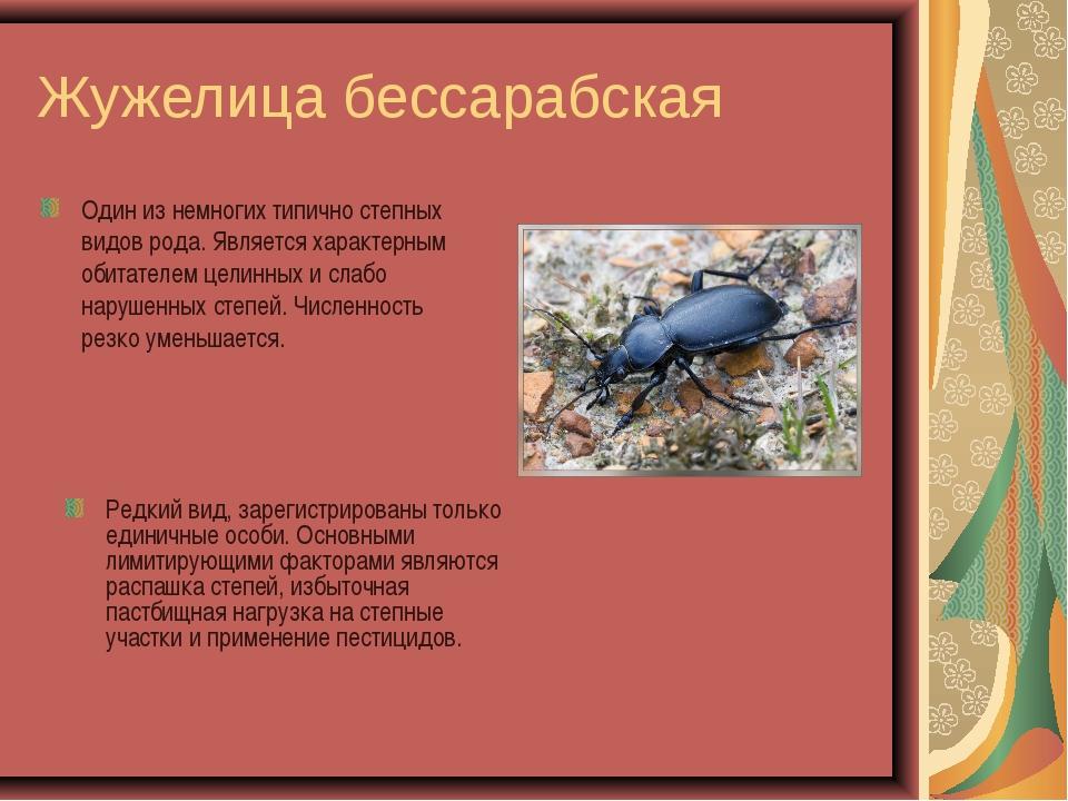 Жужелица бессарабская Один из немногих типично степных видов рода. Является х...