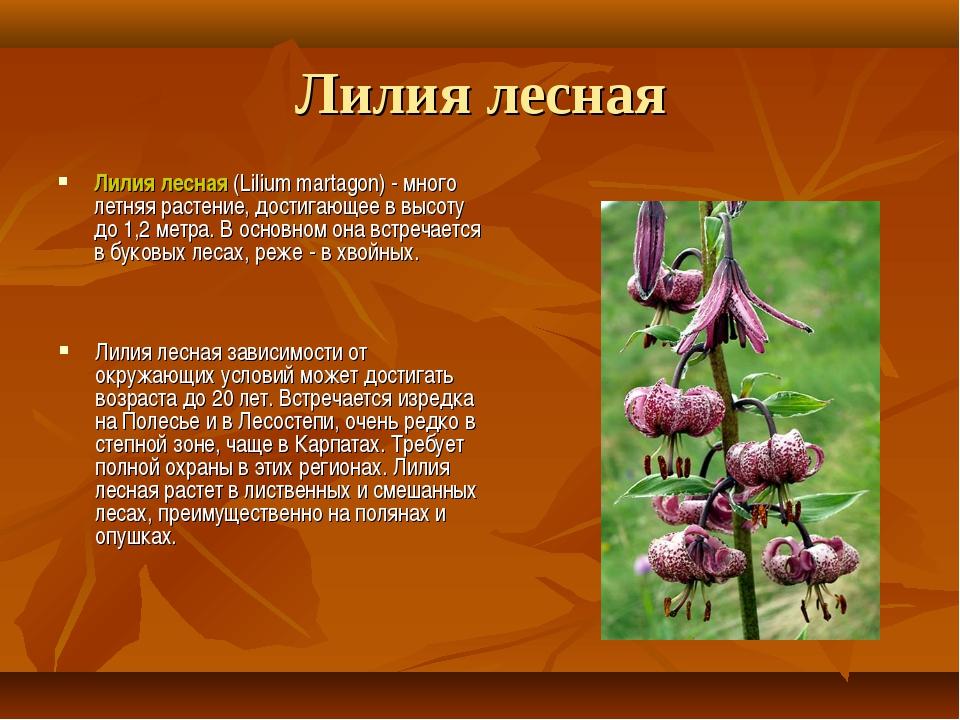 Лилия лесная Лилия лесная (Lilium martagon) - много летняя растение, достигаю...