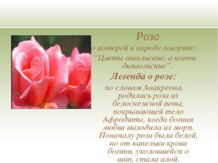 """Роза о которой в народе говорят: """"Цветы ангельские, а когти дьявольские"""". Л"""